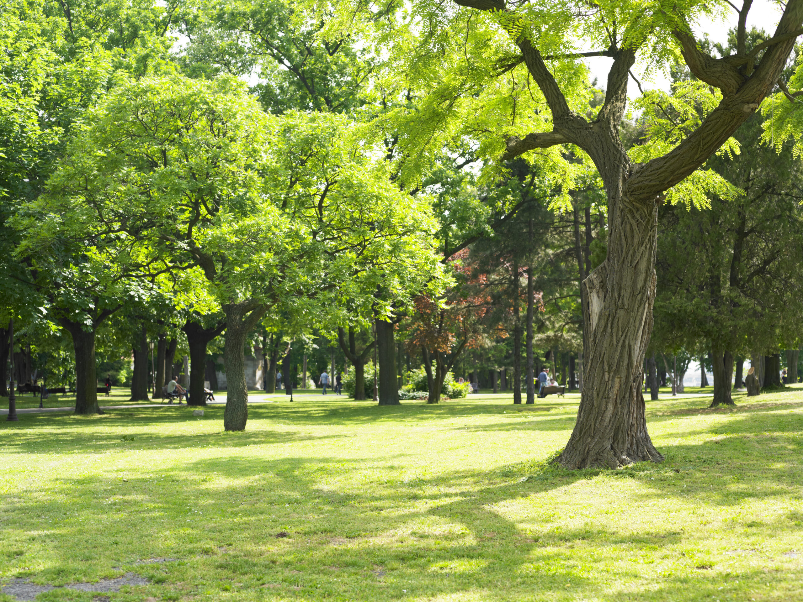 Sunny Green Park and beautiful day in nature