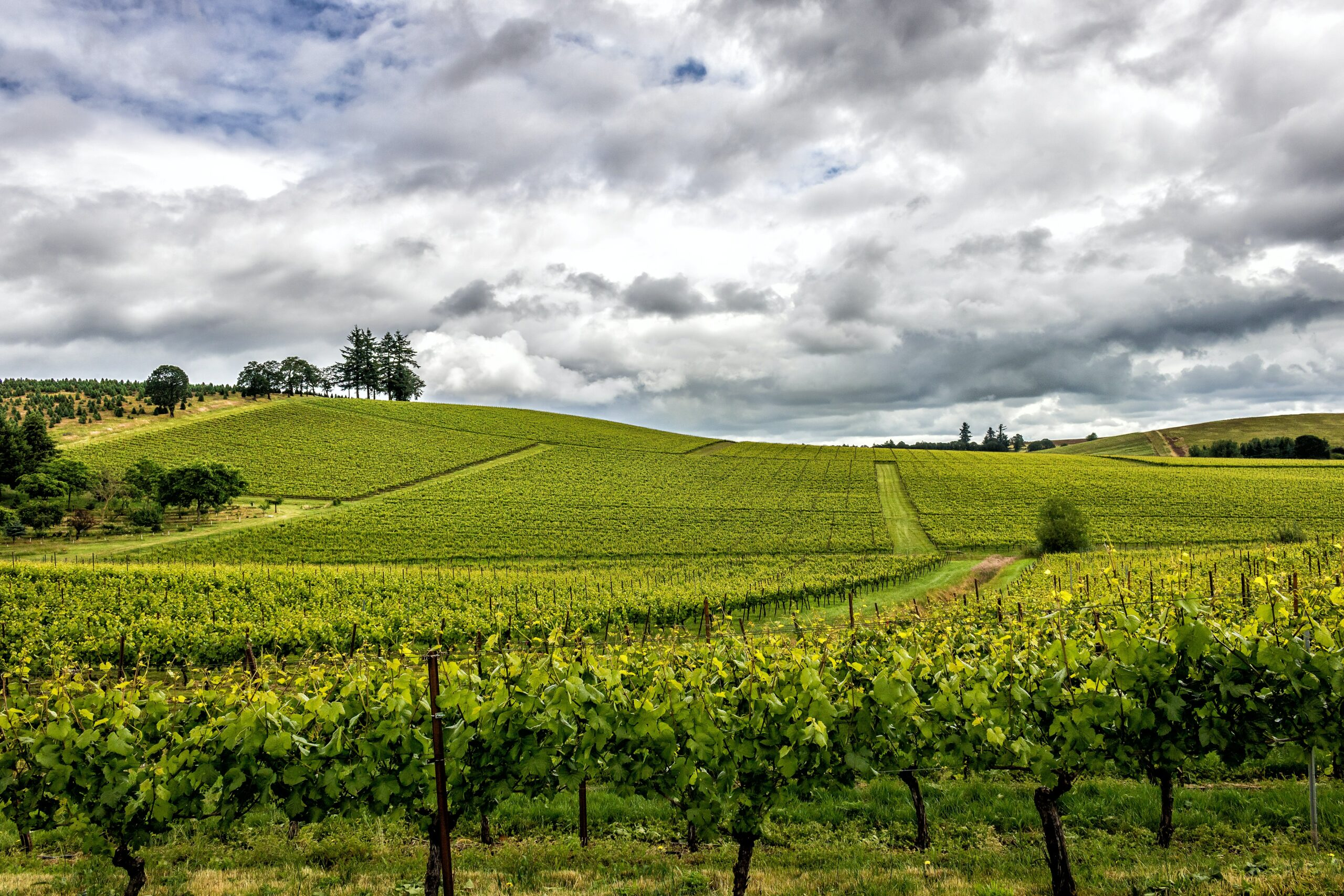 Yakima Valley green rolling hills with vineyards