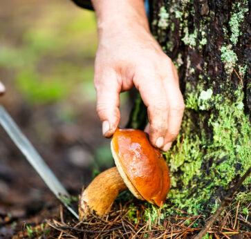 WIIN mushroom foraging action shot